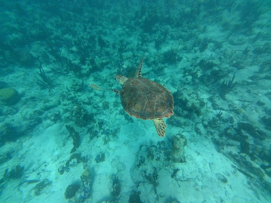 The Seagate: We saw sea turtles every day!