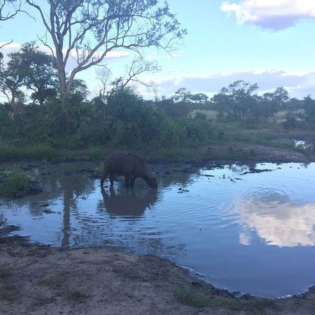 Manyeleti Game Reserve, South Africa: photo2.jpg