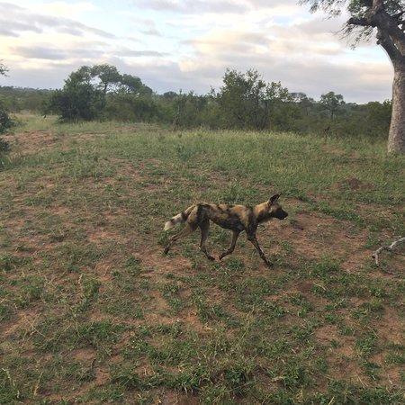 Manyeleti Game Reserve, South Africa: photo3.jpg