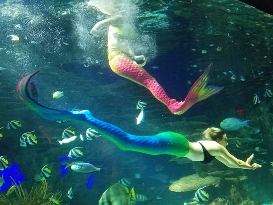 Ripley's Aquarium of the Smokies: Mermaid show