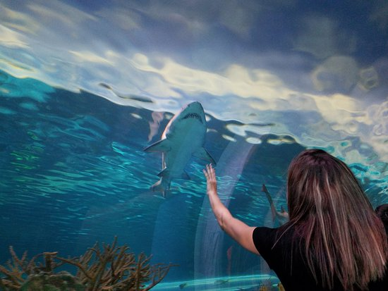 "Ripley's Aquarium of the Smokies: Now THAT's a ""Shark Tank"""