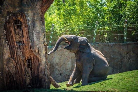 Houston Zoo - photo by Stephanie Adams