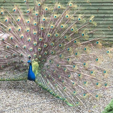 Seaforde, UK : photo0.jpg
