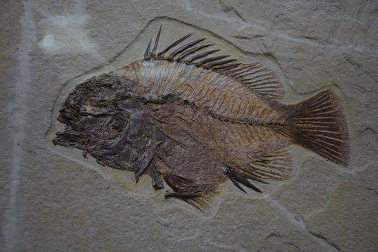 Museo Geominero: Fossil
