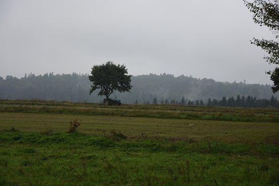Rezerwat przyrody Góra Dobrzeszowska: Gora Dobrzeszowska from a distance