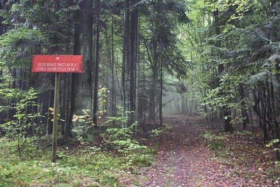 Rezerwat przyrody Gora Dobrzeszowska