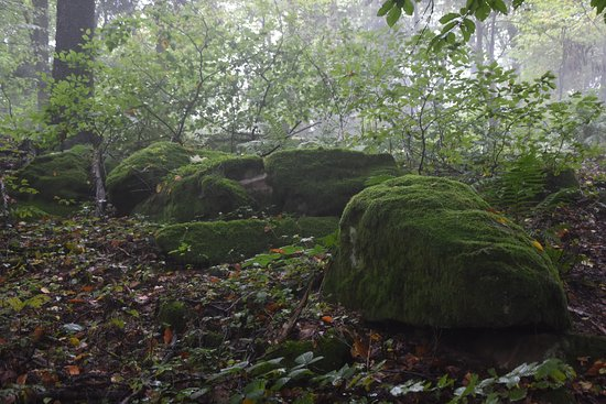 Rezerwat przyrody Góra Dobrzeszowska: Gora Dobrzeszowska