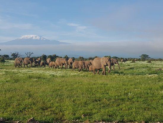 安博塞利國家公園照片