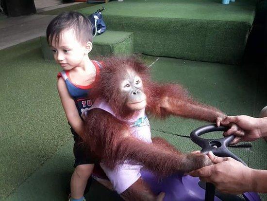Ark Avilon Zoo: FB_IMG_1523581226331_large.jpg