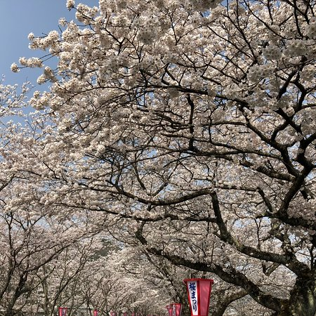 Maniwa, Japan: 満開の祭りの日でした