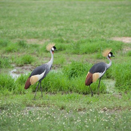 Ruaha National Park, แทนซาเนีย: photo1.jpg