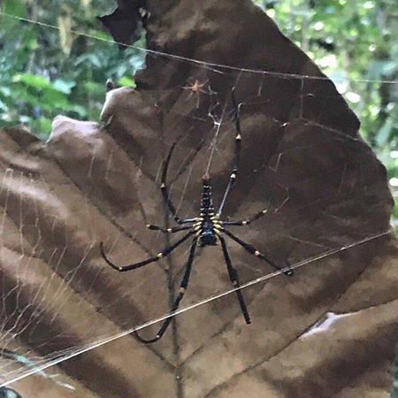 Змеи, пауки и прочая красота дикий джунглей