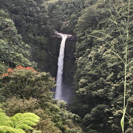 Honomu, هاواي: photo2.jpg