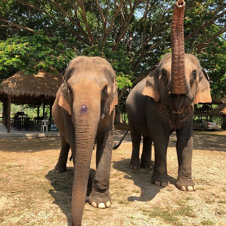 Inthanon Elephant Sanctuary & Wildlife Preserve