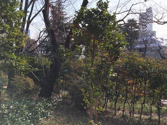 Nabeshima Shoto Park: 鍋島松濤公園