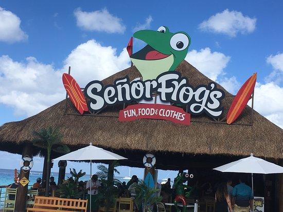 Senor Frogs at Cruise Terminal - Picture of Half Senor Frogs, Cozumel -  Tripadvisor