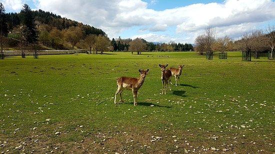 Rosegg, Austria: IMG-20180413-WA0001_large.jpg