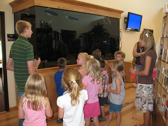 Shawano Country Chamber of Commerce & Visitor Center: 800 Gallon Fish tank with local species.