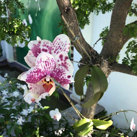 Orchid Key Inn: photo6.jpg
