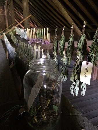 Enfield, NH: Drying Herbs from our Shaker Herb Gardens