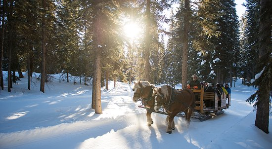 Montana: A snowy sleigh ride from Lone Mountain Ranch.