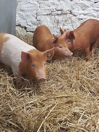 Camp, Ierland: Happy Feet Farm