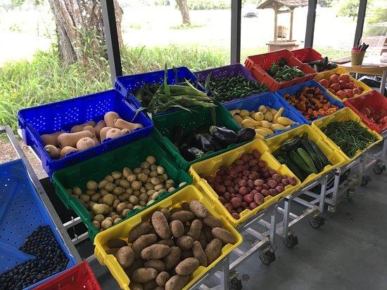 Masaryktown, فلوريدا: Fresh Fruits & Vegetables