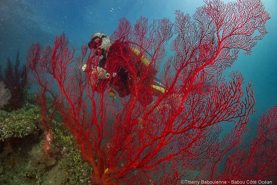 Hienghene, New Caledonia: Gorgones - Hienghène