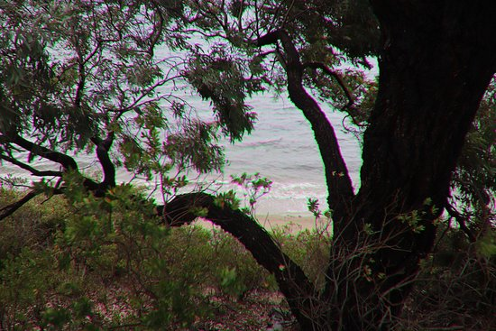 Sandy Bay: A tree