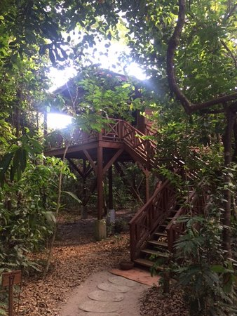 Hamanasi Adventure and Dive Resort: Approaching the tree house