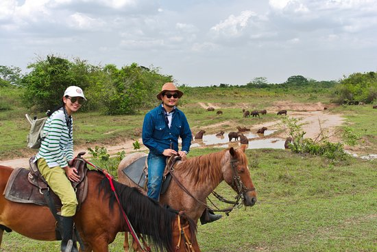 Yopal, Colombia: Exploring grassland in search of capybaras and wildlife during our tours in Casanare Colombia.
