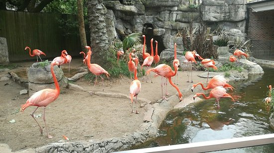 Audubon Zoo: Pink Birds...