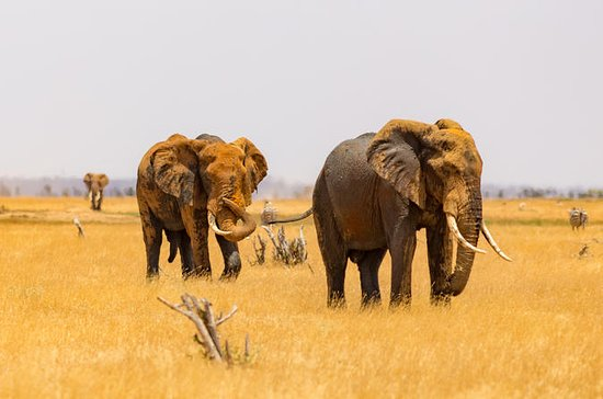 4 Days Tsavo West Amboseli and Tsavo...