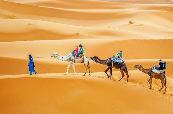 Full-Day Sahara Desert Camel Trek in...