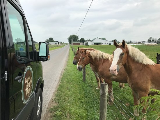 Walnut Creek, OH: Meeting new friends down the road.
