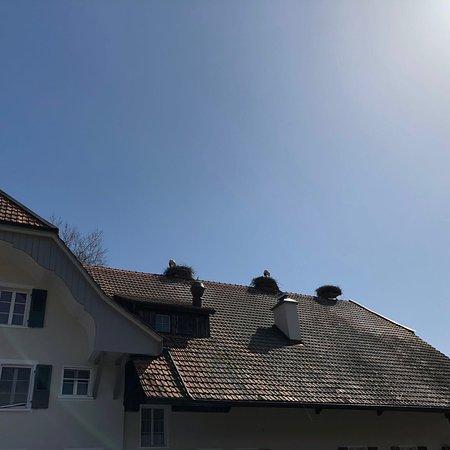 Altreu Storchendorf