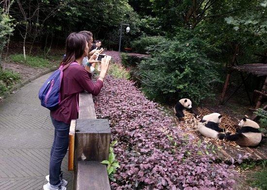Chengdu, China: getlstd_property_photo