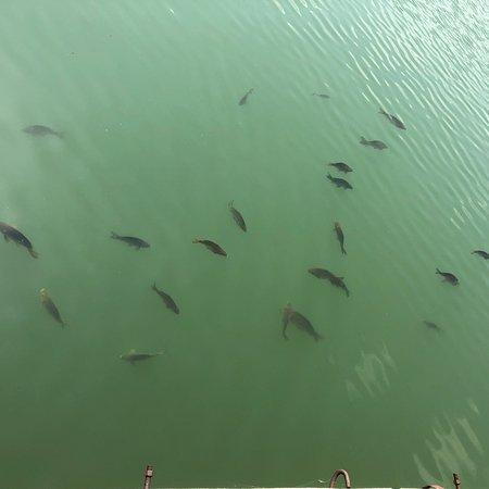 Pravets, บัลแกเรีย: photo1.jpg
