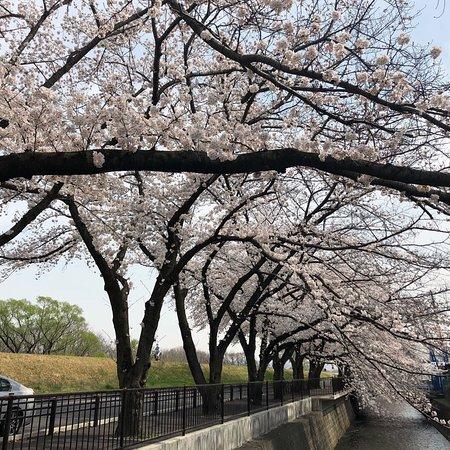 Irumagawa Promenade