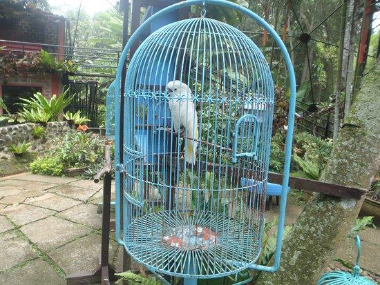 Malagos Garden Resort: vogelpark