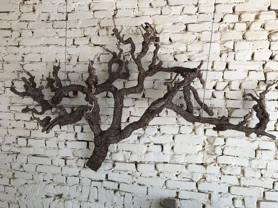 Detached old vine hanging as artwork. Turkey Flat, Barossa Valley