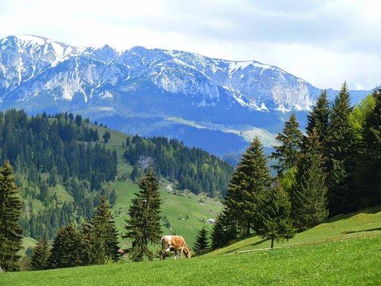 Hiking in Moeciu de Sus