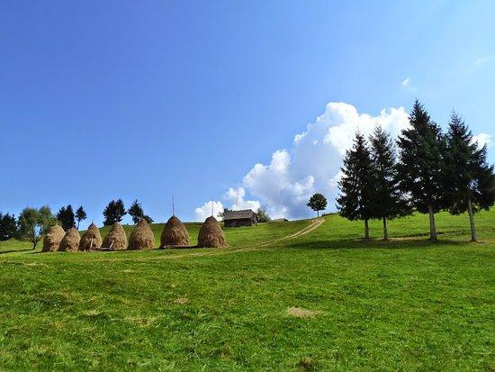 Landscape - Picture of Vila Samaha, Moieciu de Sus - Tripadvisor