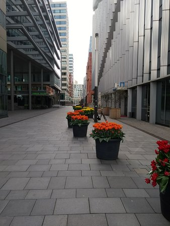 South Holland Province, The Netherlands: Y siempre los tulipanes