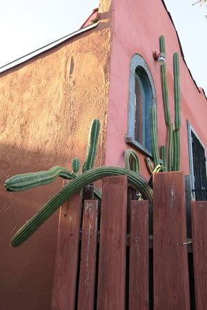 Los Feliz Lodge: Cactus over the fence of the neighboring bungalow.