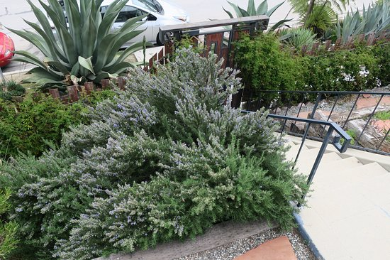 Los Feliz Lodge: Terraced garden.