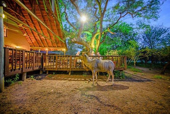 Needles Lodge: Kudu at the deck at night