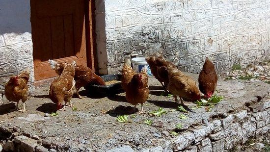 Agrafa, Hellas: Το πρωινό έχει φρέσκα αυγουλάκια...