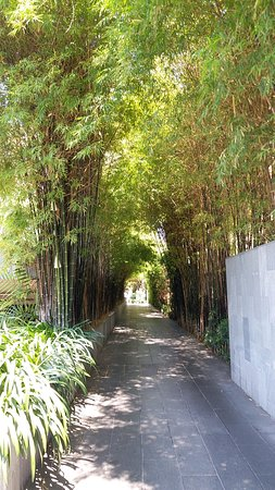 Cape Nidhra Hotel: A bamboo tunnel