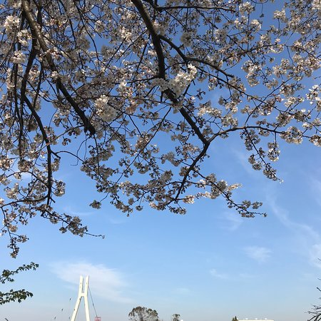 Gongendo Sakura Tsutsumi: いろんな種類の桜がとっても綺麗です!